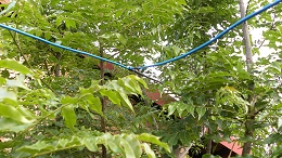HF Band QRM/QRN Noise Canceller: V-Beam pointing out of a tree